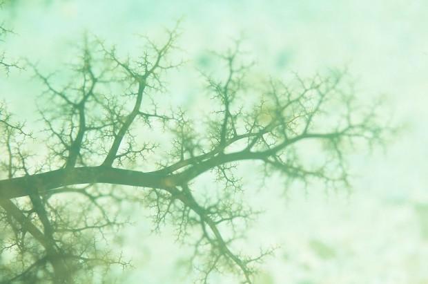 樹手目ナマコ